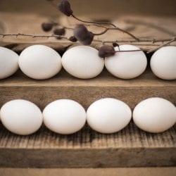 ביצי חופש אורגניות: דניאל חן