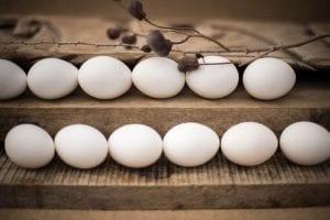 ביצים חופש אורגניות