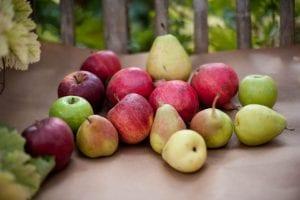 פירות עונתי 1