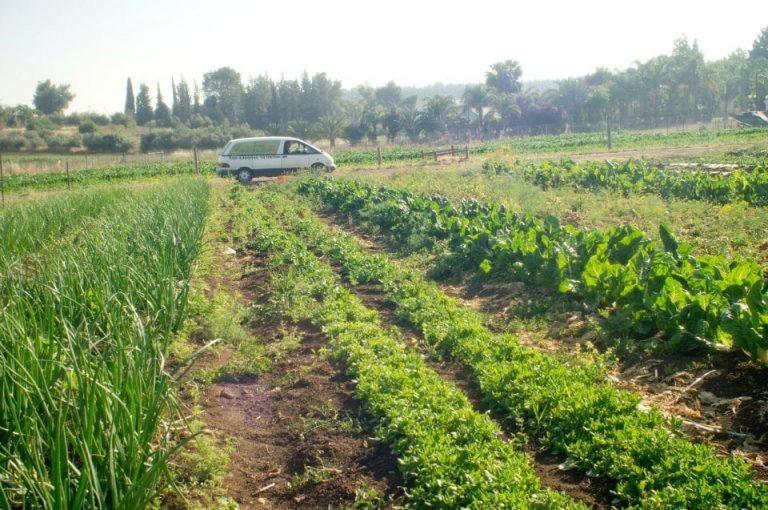 שדה ירוק - האורגני משלוחים עד הבית