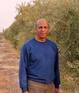 חקלאי שמגדל עצי זית אורגניים