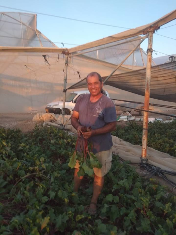 ירקות אורגנים מהערבה