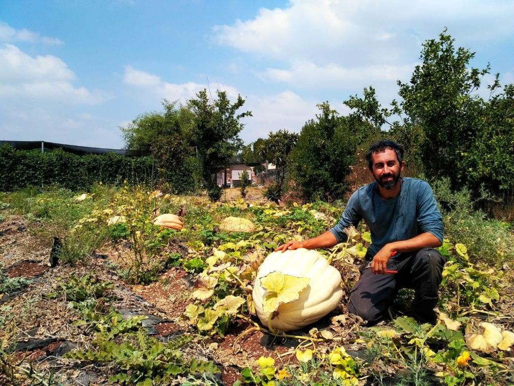 גן ירק אורגני