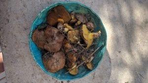 מרק פטריות יער