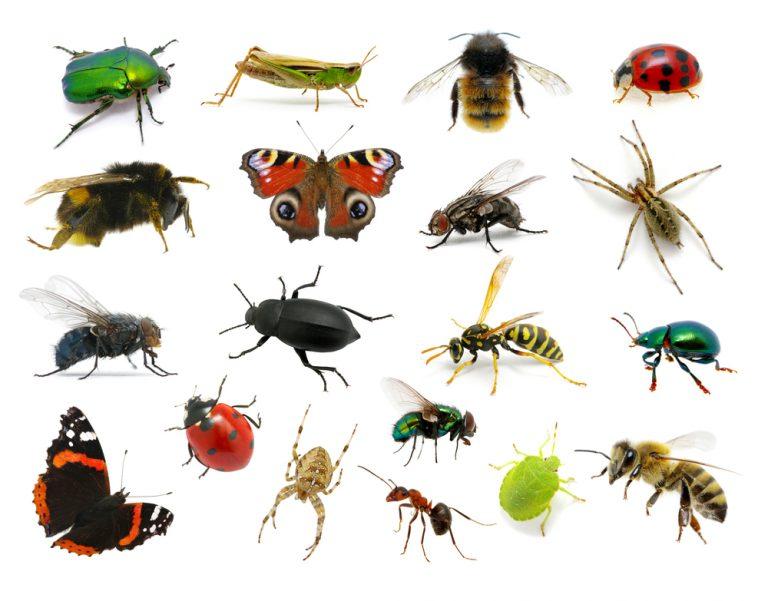 התרסקות אוכלוסיית החרקים