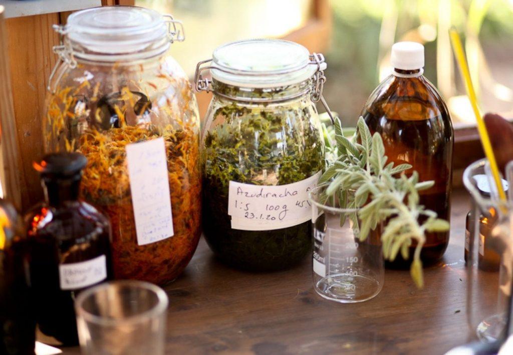צמחי מרפא אורגניים