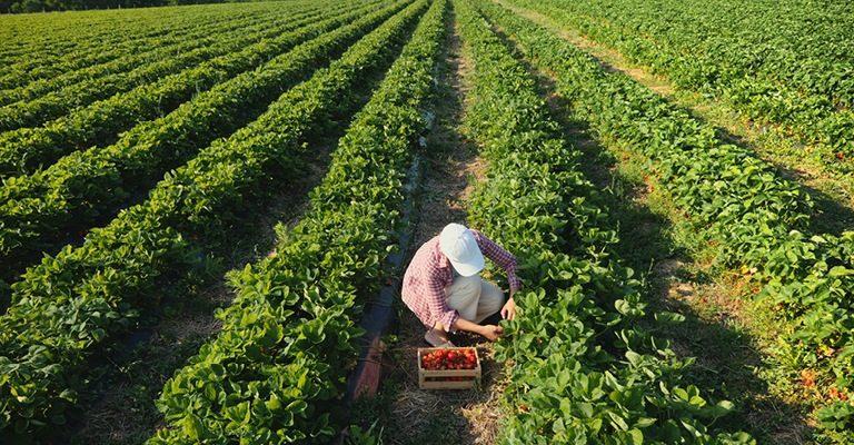 חקלאות מקומית